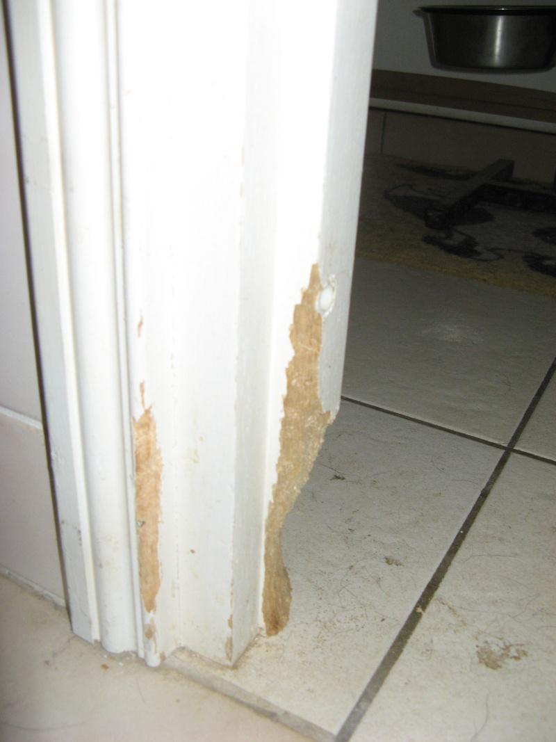 Avis aux bricoleurs r parer un chambranle de porte rong par des ratous - Comment recuperer une caution ...