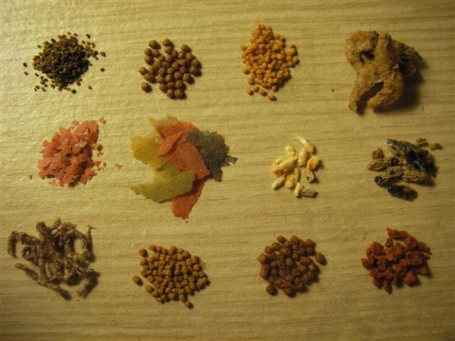 Les aliments secs for Nourriture poisson betta