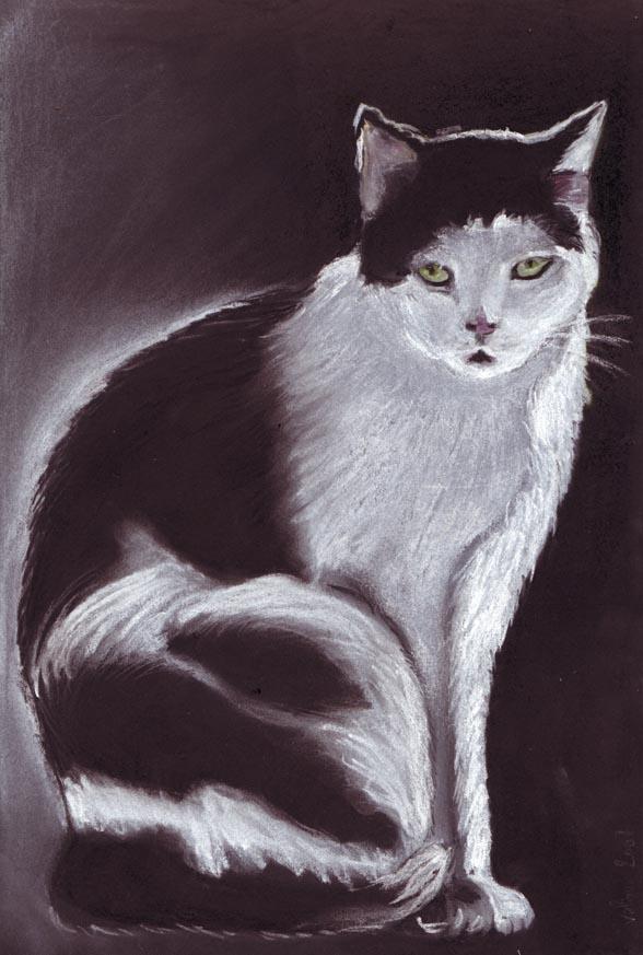 Essai pastel - chat dans pastels 75_dpi10