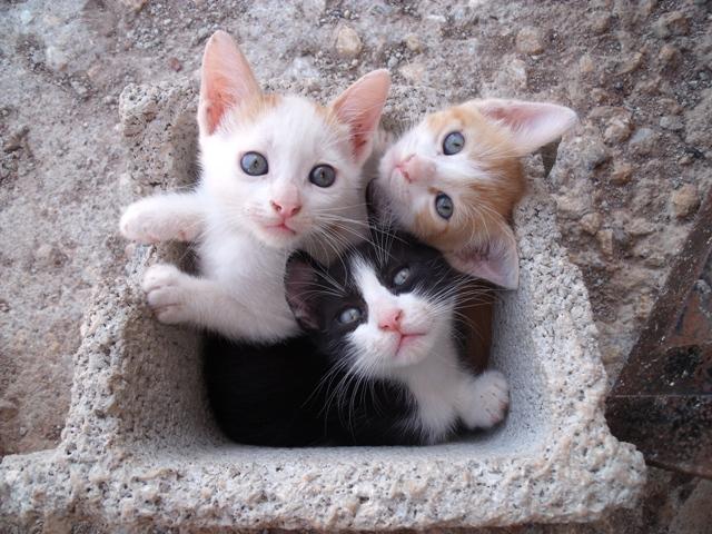 Ayuda para 3 gatitos de 2 meses los regalar n en un - Gatitos de un mes ...