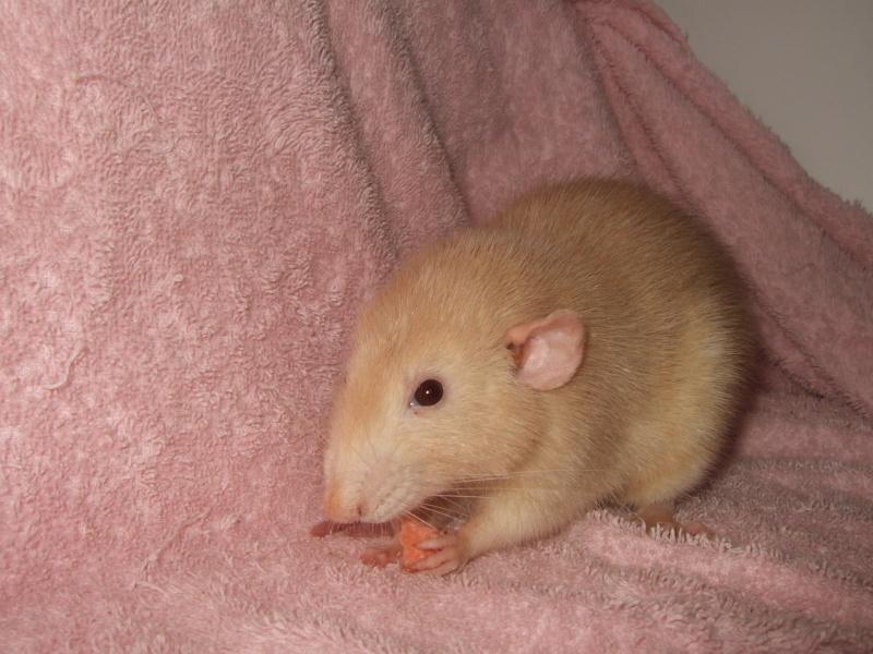 ratons11.jpg