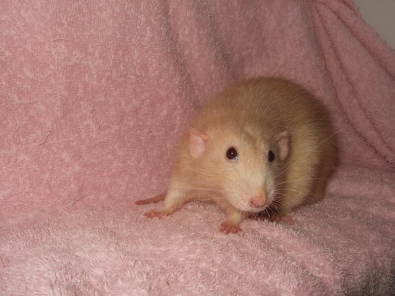 ratons12.jpg