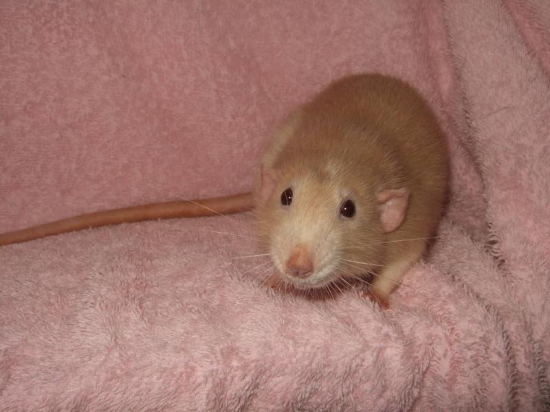 ratons14.jpg