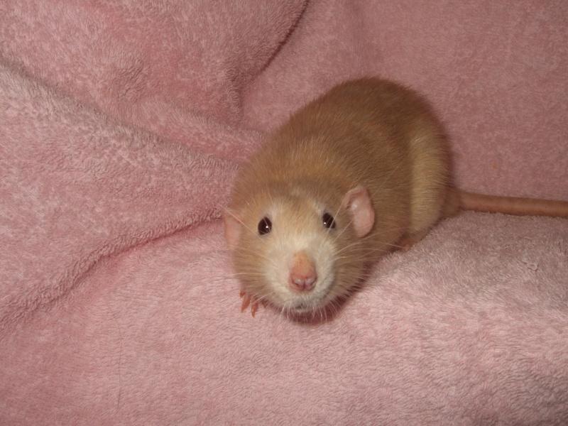 ratons15.jpg