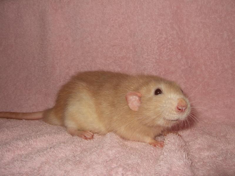 ratons16.jpg