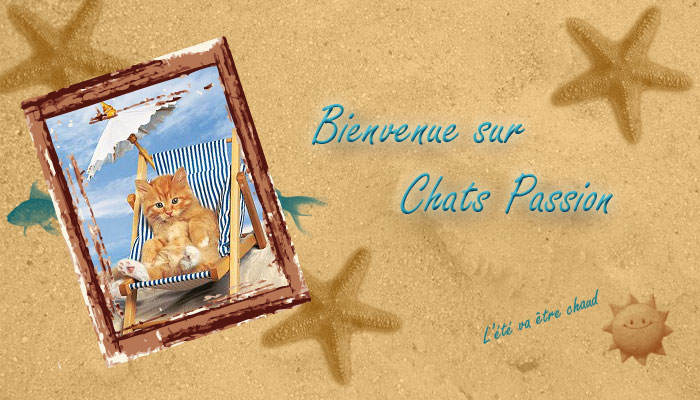 CHATS/PASSION
