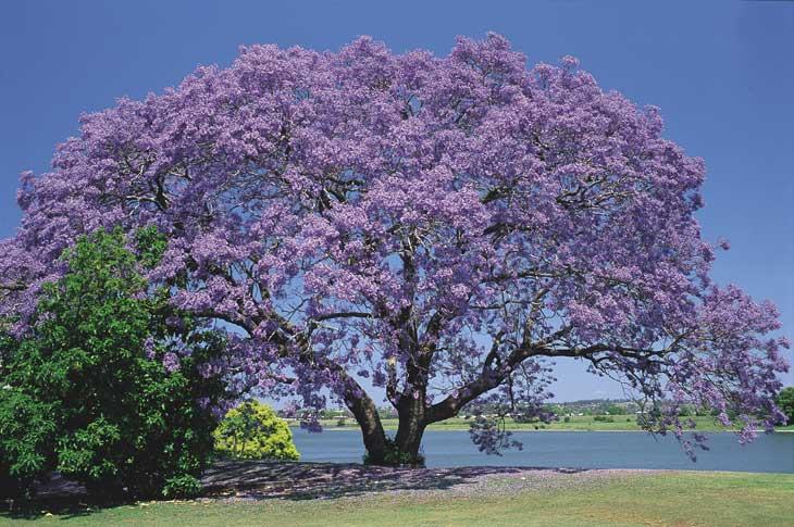 La bonne parole est comme un bel arbre...