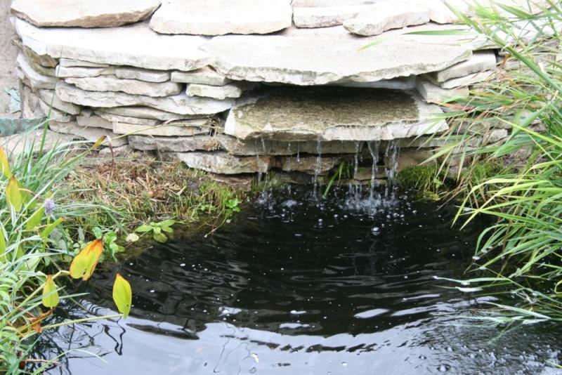 Petite cascade au jardin forum de jardinage for Bassin de jardin algues vertes