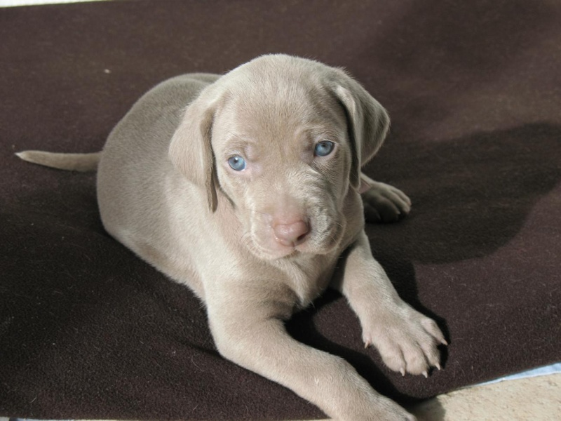 Couleur des yeux - Yeux gris bleu ...