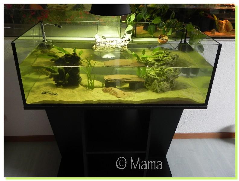 Exemples d 39 aquariums pour tortues aquatiques for Filtre aquarium tortue