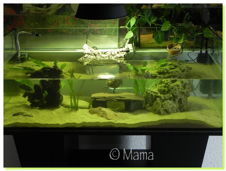 D co aquarium tortue d eau - Aquarium complet pour tortue d eau ...