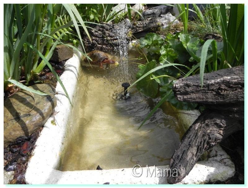 Construction d 39 un bassin pour tortues palustres for Bache plastique bassin