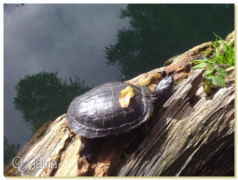 zoo_ba14.jpg