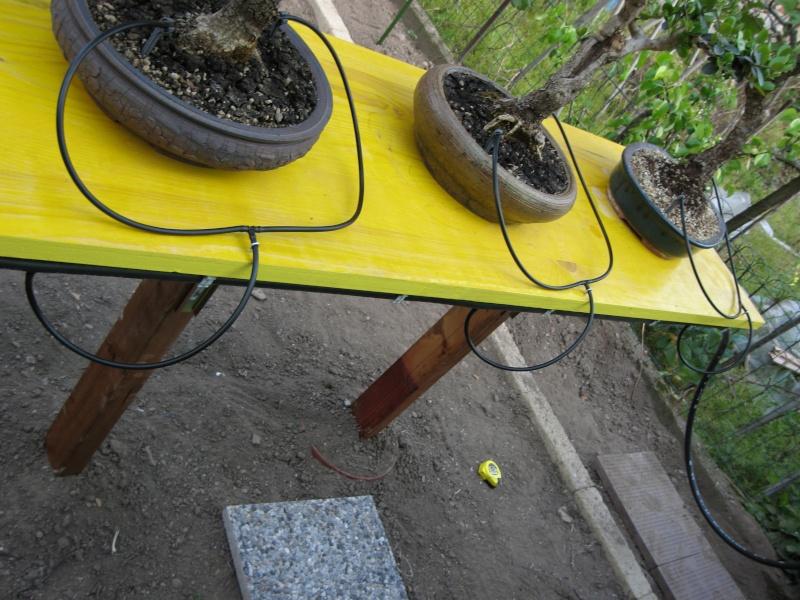 Dove coltiviamo i nostri bonsai pagina 3 for Dove comprare bonsai