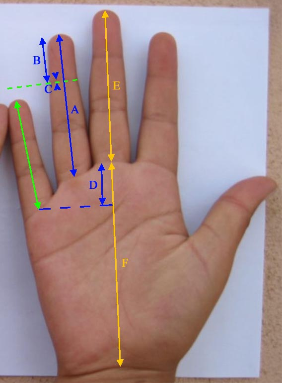 How long is your pinky finger... really?