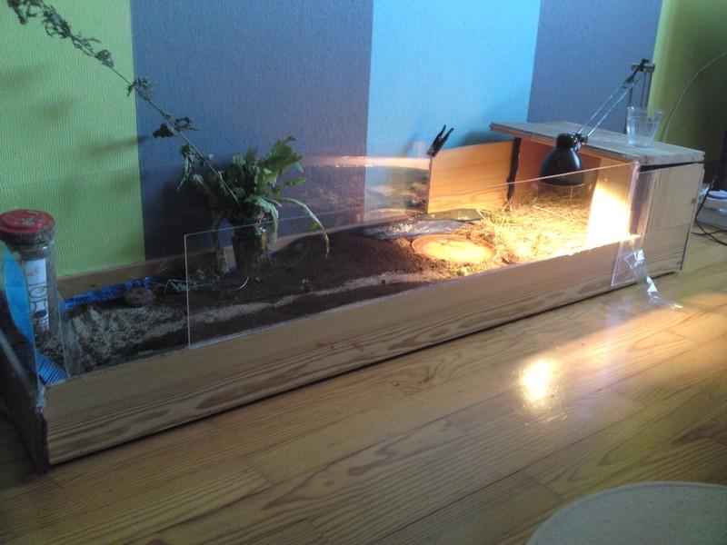 nouveau terrarium pour mes graeca