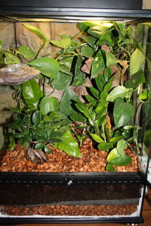 plante terrarium gecko a crete