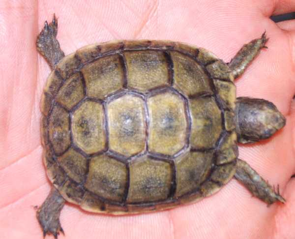 tortue terrestre trouvee dans un jardin