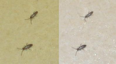 petit insecte dans ma cuisine r ph