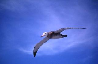 L'albatros dans POESIES, TEXTES albatr10