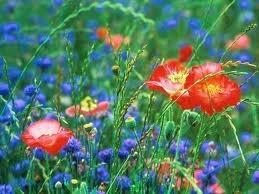 Mon jardin virtuel. dans POESIES, TEXTES fleurs11