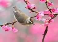 Le lever . dans POESIES, TEXTES oiseau10