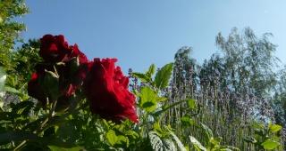 Le jardin de fleurs. dans POESIES, TEXTES p1140710