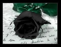 Une fleur du souvenir. dans POESIES, TEXTES rose_n10