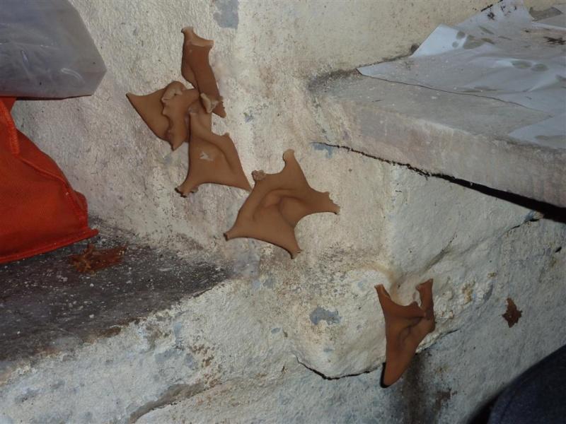 Champignon dans maison humide ventana blog - Champignon de maison merule ...